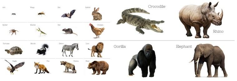 Animals-contactsheet